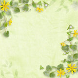 Summer background with yellow flowers Royalty Free Stock Photography