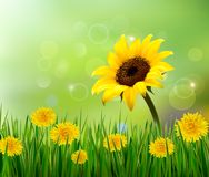 Summer background with yellow flowers and grass. Royalty Free Stock Photo