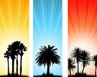 Summer backgrounds Royalty Free Stock Photos