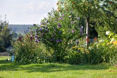 Summer backyard garden landscape, grill in the background. Summer backyard garden landscape, blue hibiscus flowers, grill in the background royalty free stock photo