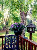 Summer Backyard. Nature surrounding deck Royalty Free Stock Photos