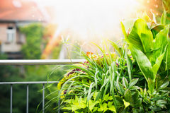 Summer Balcony and terrace plant with sunbeam at city background Stock Photo