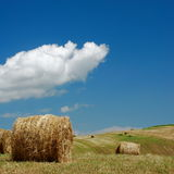 Summer bales stock image
