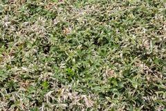 Summer bamboo leaf bush in full framed stock image