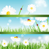 Summer banners with daisy and ladybugs Stock Image