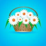 Summer basket with daisies stock images