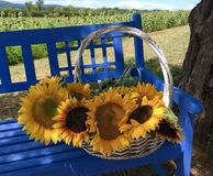 Summer Basket of Sunflowers in Stock Photo