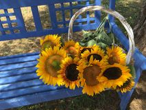 Summer Basket of Sunflowers in Virginia Royalty Free Stock Photography