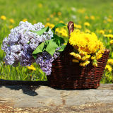Summer basket with yellow dandelions and lilacs Royalty Free Stock Photography