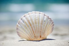 Summer at the beach. Vacation and tropical summer. Sea shell on the beach royalty free stock images