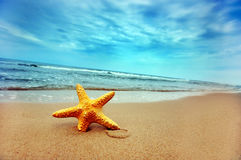 Summer beach. Starfish on the summer tropical beach