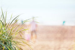 Summer beach background. Dune grasses overlooking the (defocused) beach and morning walkers Stock Photography