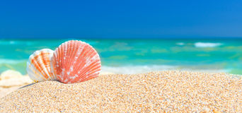 Summer Beach Background With Seashells Royalty Free Stock Photos