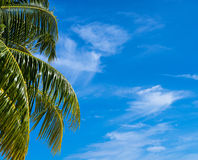 Summer beach background - sky and palm Royalty Free Stock Photography