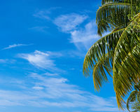 Summer beach background - sky and palm Royalty Free Stock Photo