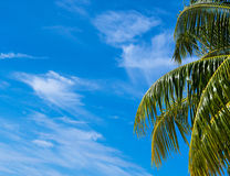 Summer beach background - sky and palm Stock Images