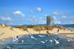 Summer beach diving birds Royalty Free Stock Photography
