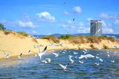 Summer beach diving birds Royalty Free Stock Photos