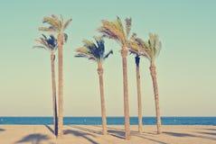 Summer beach landscape with palms, retro/vintage Stock Photo