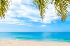 Summer beach with palm trees on blue sky Royalty Free Stock Images