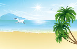 Summer beach with palm trees Royalty Free Stock Photos