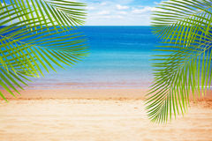Summer beach with palms Royalty Free Stock Photos