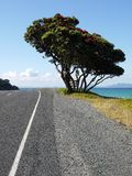 Summer: beach road ocean view Stock Images