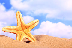 Summer beach scene, starfish on sand Royalty Free Stock Image