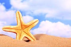 Summer beach scene, starfish on sand Royalty Free Stock Image