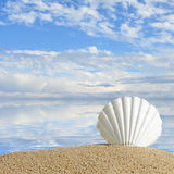 Summer beach with sea shells and blue sky Royalty Free Stock Photo