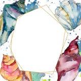 Summer beach seashell tropical elements. Watercolor background illustration set. Frame border ornament square. Summer beach seashell tropical underwater royalty free illustration