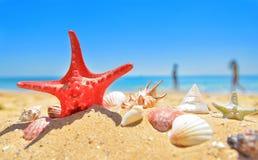 On summer beach Royalty Free Stock Photos