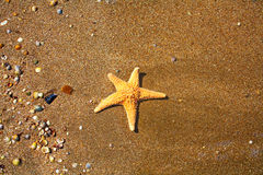 Summer Beach. Starfish and Small Seashell on the Sand from above. Stock Photography