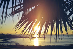 Summer beach sunset palm tree vintage background. Summer time paradise sunset beach background with palm tree leaf and vintage filter effect Royalty Free Stock Image