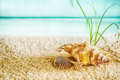 Summer beach in a tropical paradise. With a cockle, seashell and small starfish on golden sand with a lush green plant in a conceptual background of travel and Royalty Free Stock Image