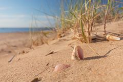 Summer beach in a tropical paradise. Summer beach in a tropical paradise with a seashell  on golden sand. Wide angle , copy space for your text Royalty Free Stock Images