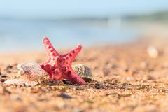 Summer beach in a tropical paradise with a  seashell and  starfi. Sh on golden sand. Conceptual background of travel and summer vacations. Selective focus , copy Royalty Free Stock Photos