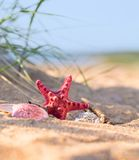 Summer beach in a tropical paradise with a  seashell and  starfi. Sh on golden sand. Conceptual background of travel and summer vacations. Selective focus , copy Stock Image