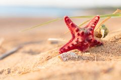 Summer beach in a tropical paradise with a  seashell and  starfi. Sh on golden sand. Conceptual background of travel and summer vacations. Selective focus , copy Royalty Free Stock Images