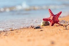 Summer beach in a tropical paradise with a  seashell and  starfi. Sh on golden sand. Conceptual background of travel and summer vacations. Selective focus , copy Stock Photos