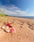 Summer beach in a tropical paradise. Summer beach in a tropical paradise with a seashell and starfish on golden sand. Wide angle , copy space for your text Stock Image