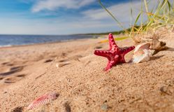 Summer beach in a tropical paradise. Summer beach in a tropical paradise with a seashell and starfish on golden sand. Wide angle , copy space for your text Stock Images