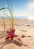 Summer beach in a tropical paradise. Summer beach in a tropical paradise with a seashell and starfish on golden sand. Wide angle , copy space for your text Stock Photo