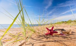 Summer beach in a tropical paradise. Summer beach in a tropical paradise with a seashell and starfish on golden sand. Wide angle , copy space for your text Stock Photography