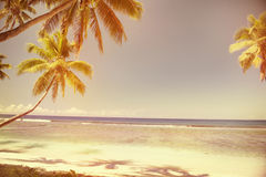 Summer Beach Tropical Peaceful Sunset Concept Stock Image