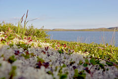 Summer Beach tundra polar region. The lake in the summer tundra polar region Stock Images
