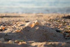Summer beach. Two seashells on a sand Stock Photos