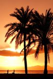 Summer beach vacation palm tree. A palm tree on the beachon summer vacation at dawn dusk sunrise or sunset Royalty Free Stock Photography