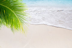 Summer beach. View of nice tropical beach with some palms royalty free stock images