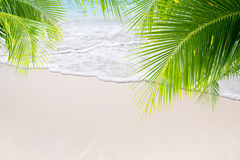 Summer beach. View of nice tropical beach with some palms stock image